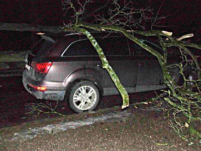 На проспекте Я.Купалы на машину упало дерево