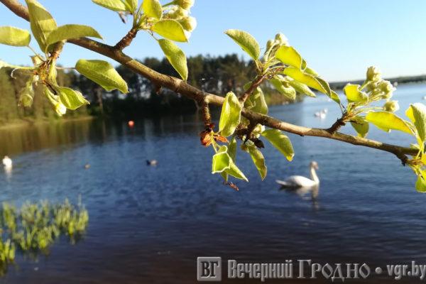 юблейное озеро гродно